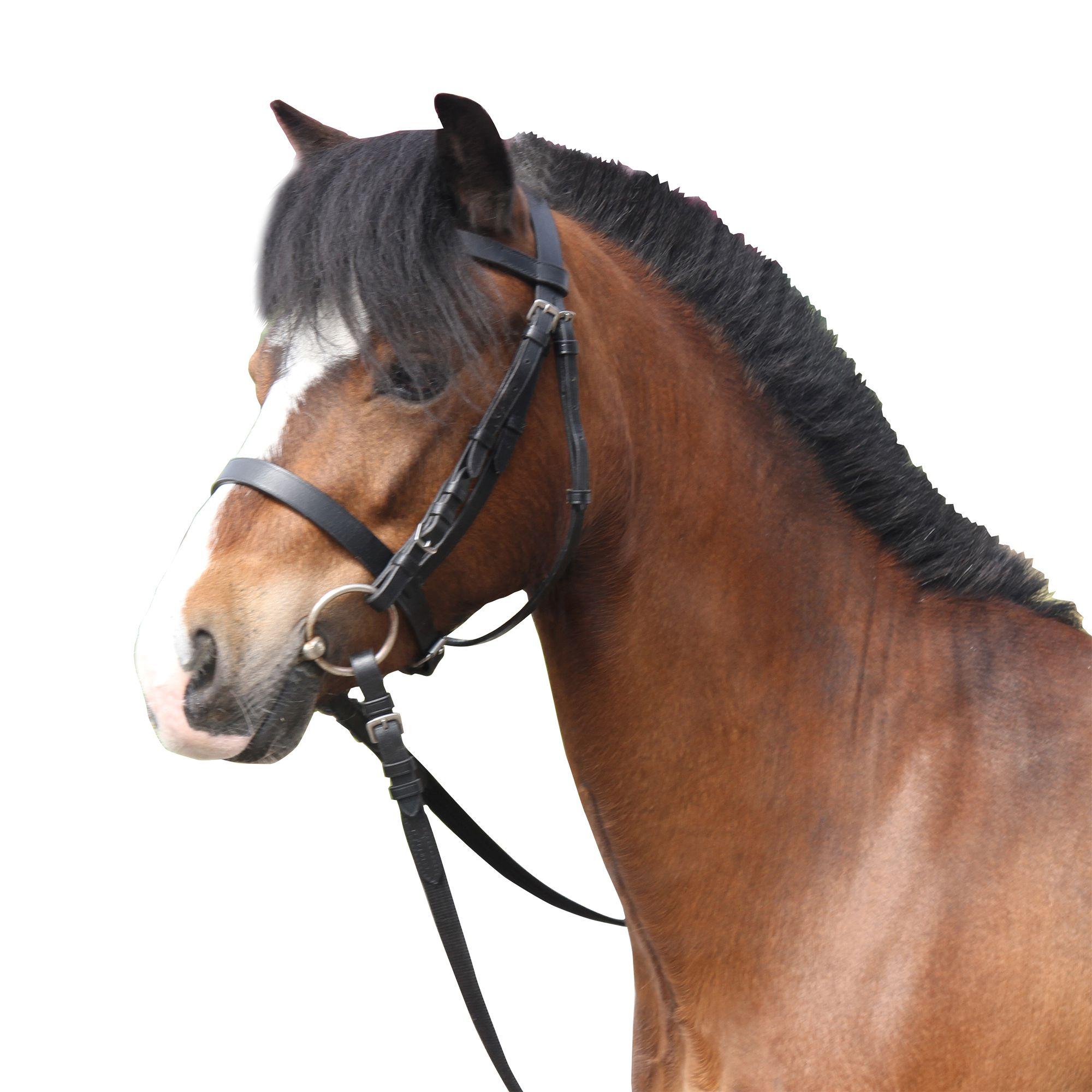Filet + rênes équitation cheval et poney SCHOOLING cuir noir - Clubs    Collectivités   Decathlon Pro 63d26af7db0