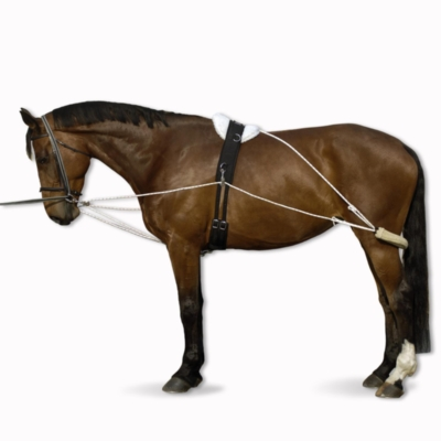 Enrênement polyvalent équitation cheval blanc