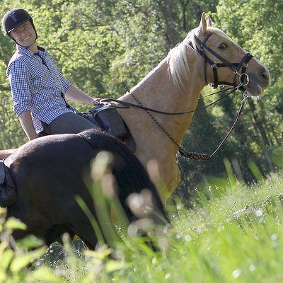 Longe équitation randonnée SENTIER marron