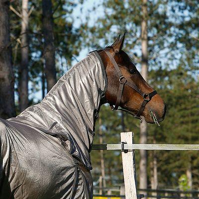 Licol équitation poney et cheval SCHOOLING marron