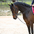 Rênes allemandes cuir et corde équitation cheval ROMEO noir