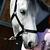 Licol équitation poney et cheval SCHOOLING noir