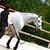 Licol + longe éthologique équitation poney et cheval WHISPERER noir