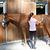 Lotion à paillettes équitation cheval et poney 250 ML