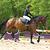 Sangle bavette cuir équitation cheval et poney ROMEO noir
