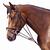 Gogue équitation cheval et poney SCHOOLING marron